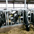 Лучшие практики региональной поддержки молочного скотоводства, а также техническую и технологическую модернизацию подотрасли обсудили на совещании в Минсельхозе России.