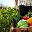 Минсельхоз обеспечит подготовку специалистов в сфере органического сельского хозяйства