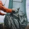 Правительство РФ выделит дополнительные средства на поддержку агропромышленного и рыбохозяйственного комплексов