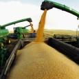 Россия с начала года экспортировала 36,2 миллиона тонн пшеницы