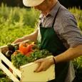 Новый урожай позволит снизить цены на продукты в России