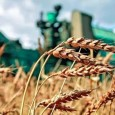Экспортные цены на пшеницу снижаются