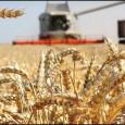Президент России В. В. Путин заявил, в 2021 году урожай будет меньше, чем в прошлом году, планируется собрать более 127 миллионов тонн зерна.