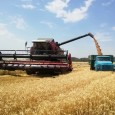 Валовой сбор зерновых в России превысил 5 млн тонн
