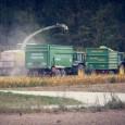 В России началась уборка кукурузы и подсолнечника